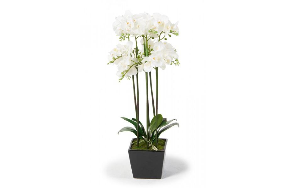 sch ne orchideen weiss k nstliche blumen. Black Bedroom Furniture Sets. Home Design Ideas