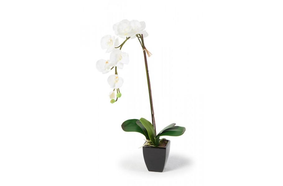 sch ne orchideen in weiss k nstliche blumen kaufen in der. Black Bedroom Furniture Sets. Home Design Ideas