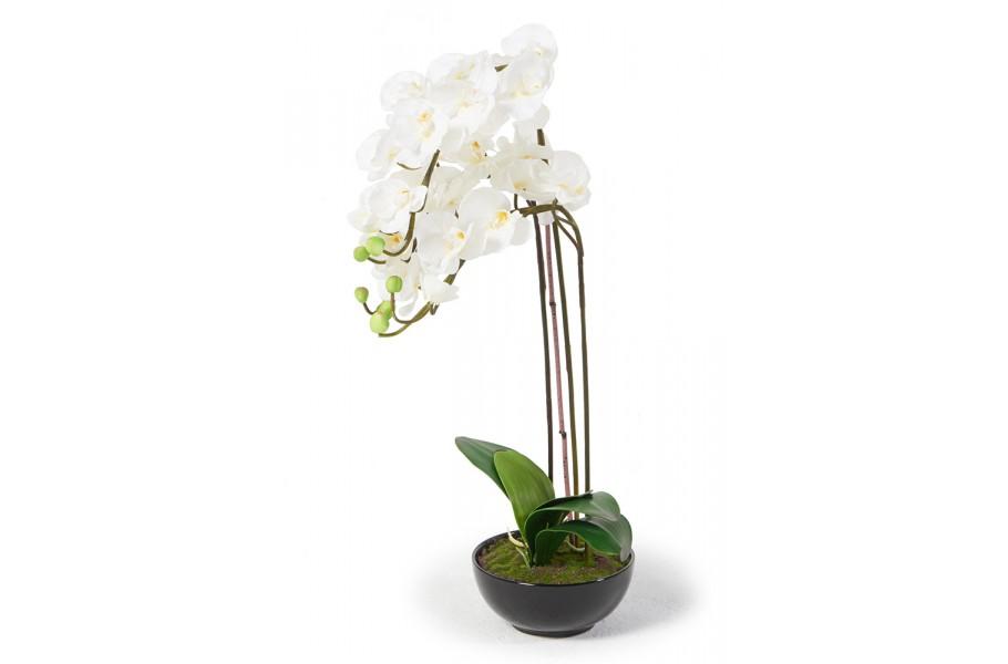 sch ne orchideen weiss 75cm haltbare k nstliche blumen. Black Bedroom Furniture Sets. Home Design Ideas